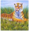Pittura-Tigre animale (A016)