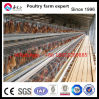 Cages de couche de poulet pour 5000-10000 couches
