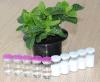 De alta pureza de grado alimenticio ácido hialurónico en polvo --- Precio de la promoción