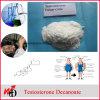Testosterona esteroide Decanoate del polvo del GMP del crecimiento del músculo de USP