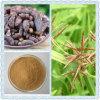 Galgantwurzel-Rhizom Rhizoma Cyperi Auszug