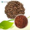 Kiefer-Barke-Auszug-natürliches Antioxydant 95% Proanthocyanidins OPC-Puder