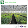 De Serre van het Glas van het Type van Venlo voor Moderne Landbouw