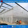 Serra galvanizzata di privazione dell'indicatore luminoso del blocco per grafici d'acciaio per la serra del fungo