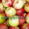 Good quality Carton Packing Fresh Jiguan Apple