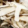 Parts/quarts secs gelés de champignon de couche de Shiitake