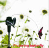 L'énergie solaire flottant papillon