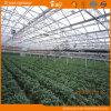 Planting Vegetalbes&Fruits를 위한 좋은 Look Venlo Type Glass Greenhouse