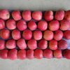 175-198 Una capa de rubor rojo FUJI Apple