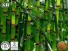 Prêle naturel extrait de silice organique de 7 %; 10 : 1