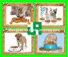 O Pet// Cães Gatos Máquina de Alimentação///Equipamento de máquinas (TSE65-P)