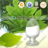 Extrait de thé vert les polyphénols de thé de 98 %, l'EGCG, ECG