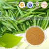 Tè naturale Polyphenol&#160 dell'estratto 98% del tè verde di Tp 60%EGCG;