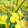 Pólen quebrado da abelha de 100% alimentos naturais naturais (pólen da abelha da corda)
