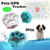 Meilleure qualité de la norme IP66 Mini GPS Tracker pour les animaux de compagnie (V30)