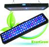 Lo Evergrow serie2080 LED Iluminación Aquariun Más Vendidos