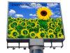 Grande schermo P16 esterno che fa pubblicità al video tabellone del LED