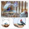 Plástico personalizado pluma de acrílico redonda alimentador de aves