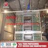 Silberner Stern über 95% Ei-Produktions-Huhn-Batterie-Entwurf