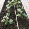 Landwirtschaft Drip Irrigation Pipe für Plants