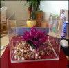 Custom Size Acrylic Fish Tank / Clear Acrylic Aquarium