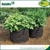 A planta creativa de Onlylife Oxford cresce o saco que as multi cores crescem o potenciômetro