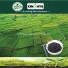 Aumento di bambù del condizionatore del terreno del carbone di legna del fertilizzante di Kingeta produttivo