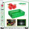 Cassa pieghevole di plastica del supermercato per le frutta e le verdure