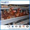 H-Tipo Semi-Automation equipo de la jaula de pollo puede alimentar 50000