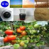 Fertilizzante organico di Omri del fertilizzante solubile in acqua del fertilizzante dell'amminoacido