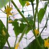 정원에 있는 고강도 직업적인 농업 그물 또는 플랜트 지원 그물