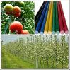 ガラス繊維FRPのプラント棒、庭の棒、トマトの棒