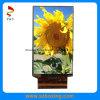 LCD TFT de 6 pulgadas de pantalla para lector de libros