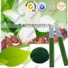 Pigmento comestible natural del color del polvo verde del Gardenia