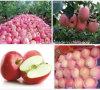 2015新しいフルーツ新しい富士Apple