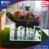 Eindeutiger quadratischer großer Acrylblumen-Behälter-Rosen-Schaukarton