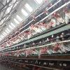 Jaulas de batería prefabricadas acoplamiento de acero del diseño de la granja de pollo de la capa del huevo