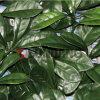 맞물리는 인공적인 산울타리 플라스틱 잎 담