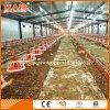Matériel automatique de ferme avicole dans la Chambre de poulet de l'usine