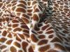 Congregação da impressão do luxuoso do leopardo