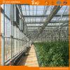 Agribusiness를 위한 높은 Cost Performance 다중 Span Glass Greenhouse