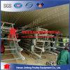 Gabbia del pollo degli uccelli di uso 120 dell'azienda avicola del pollo della Nigeria