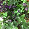 인공적인 경엽 내부 외부 정원사 노릇을 하는 훈장 디자인을%s 수직 정원 벽 플랜트