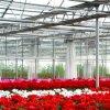 De Plastic Serre van de Lage Kosten van de landbouw voor Bloemen