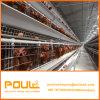 Une couche de poulet de type Cage avec buveur automatique Système d'alimentation