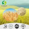 De uitstekende kwaliteit Gehydroliseerde Proteïne van de Tarwe/Proteïne van de Tarwe van de Tarwe van de Tarwe de EiwitUittreksel Gehydroliseerde Eiwit/Organische Gehydroliseerde/Uitstekende kwaliteit Gehydroliseerde Plantaardige Proteïne