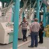 자동적인 150tpd 밀가루 맷돌로 가는 기계장치