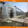 외관 Venlo 좋은 유형 다중 경간 유리벽 온실