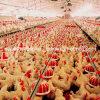 Strumentazione del pollame della Camera del selezionatore di alta qualità dell'insieme completo
