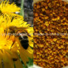 Top Leve 100% Rare Natural Wild Dandelion Bee Pollen, No Antibiotics, No Pesticides, No Pathogenic Bacteria, Lose Weight, Anticancer, Prolong Life, Health Food
